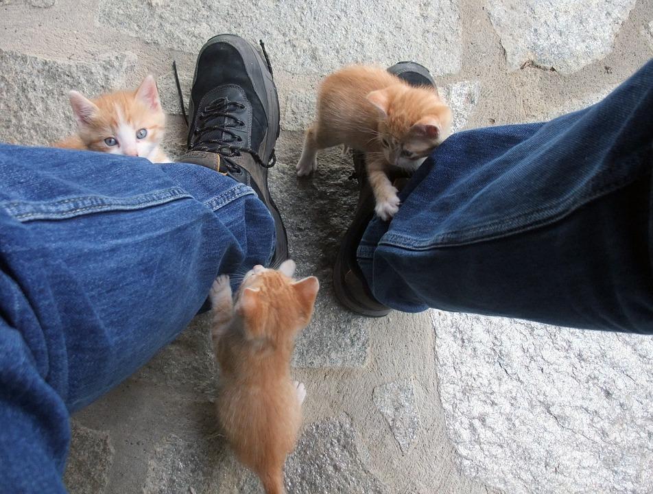 Gaticos-jugando.jpg
